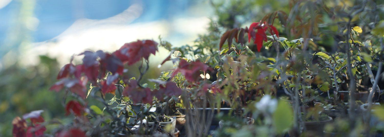 キミのミニ盆栽生活。